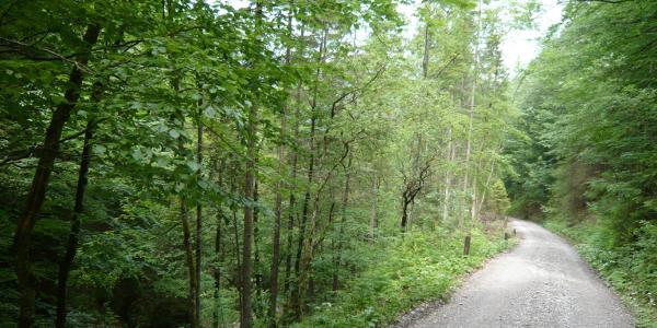 ...Wald...