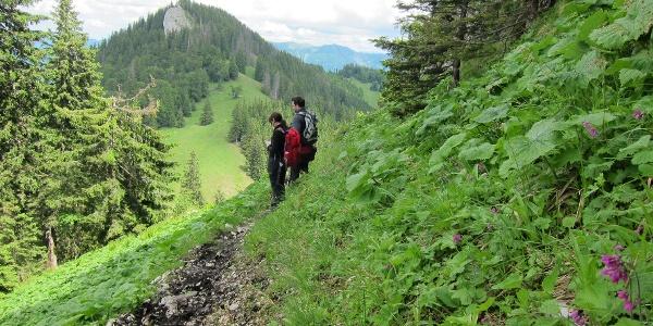 Abstieg vom Alpstein
