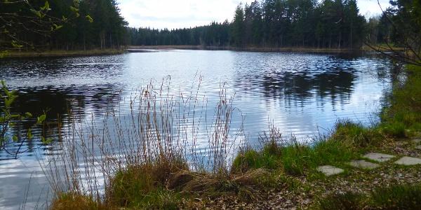 Der Pollinger Weiher liegt wunderschön inmitten von Mooren, Wiesen und Wäldern.