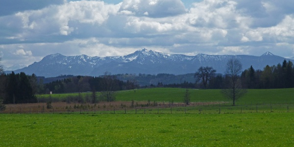 Am Waldrand auf der Ostseite des Pollinger Weihers eröffnet sich ein grandioser Blick auf die Alpenkette.