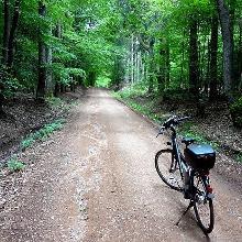 Waldpassage auf dem Weg von Oberthal zur Nohmühle