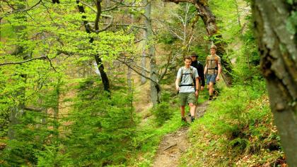 Buchenwald im Nationalpark Kalkalpen