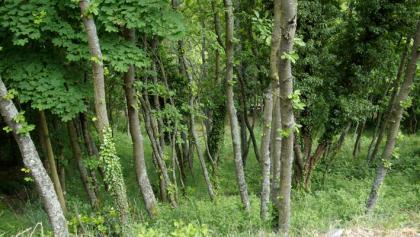 Die Wanderung führt uns durchs Reiherholz.