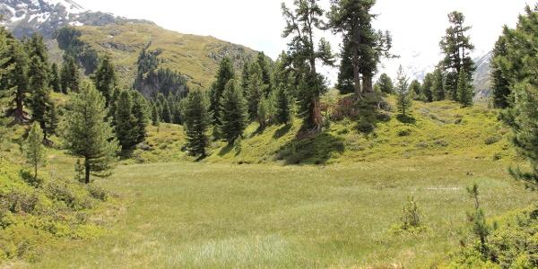 Hochmoor im Zirbenwald