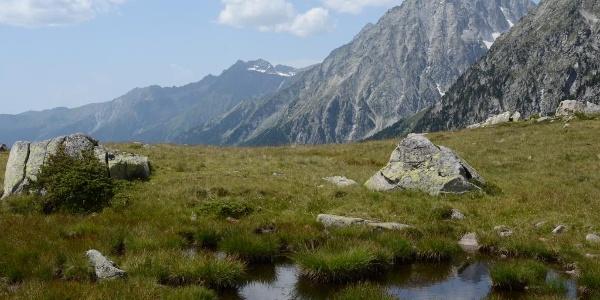 Zurück ins Grün: Beim Abstieg zum Staller Sattel taucht man ein in die Almlandschaft, überragt vom Wildgall.