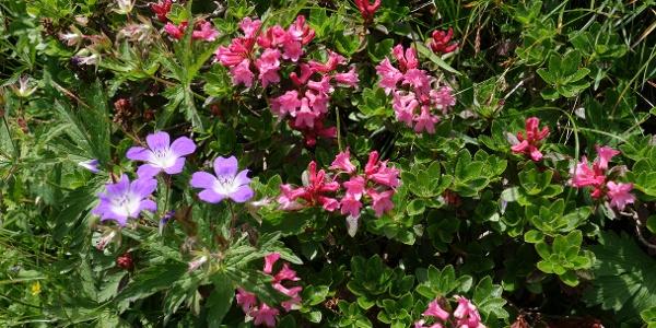 Aber auch im Juli ist die Blumenpracht beeindruckend
