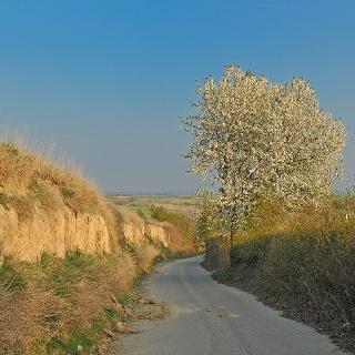 Hohlweg im Frühling