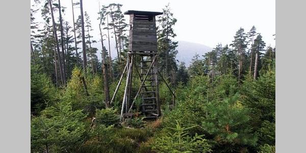 Von hier aus hat man einen guten Rundblick über die Wälder um Schömberg.