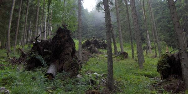 Passagen mit Urwaldcharakter erleben wir auf dem Weg zum Watzmannhaus.