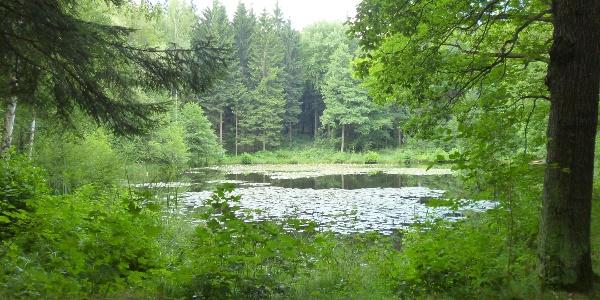 Mit Seerosen bewachsener Teich am Naturlehrpfad