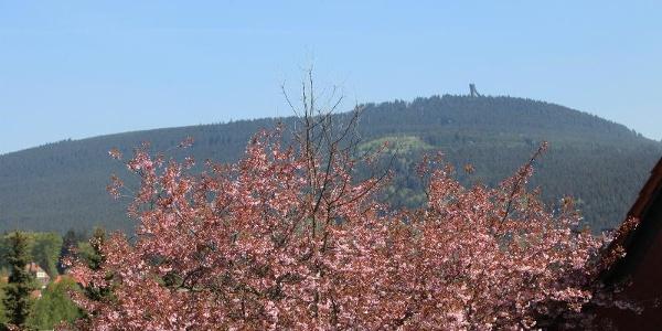 Blick auf den Wurmberg