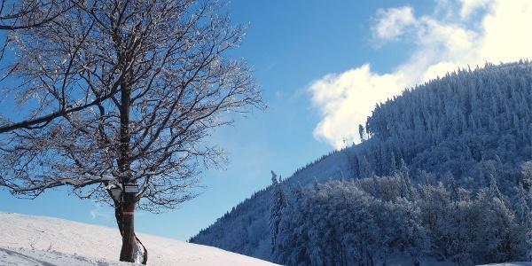 Abzweig zum Hochbuchberggipfel 1145 m