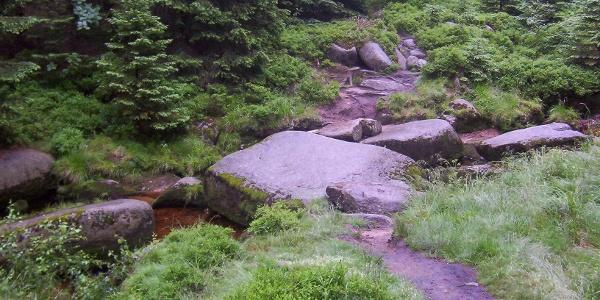 Der Weg durch den Nationalpark Harz ist ein Erlebnis.