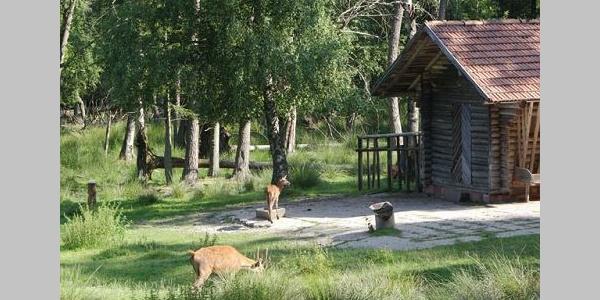Beim Wildgehege in Kapfenhardt gibt es immer etwas zu sehen.