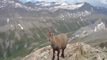 Besucherin beim Biwak - dahinter der Blick in Richtung Südwesten (Frankreich).