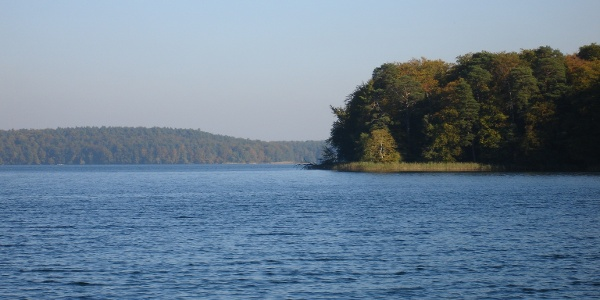 Der Stechlinsee ist durch halbinselartige Vorsprünge stark gegliedert und umfasst eine Fläche von 425 ha.