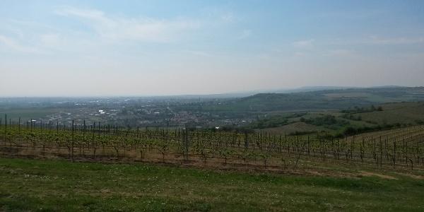 Aussicht vom Galgenberg
