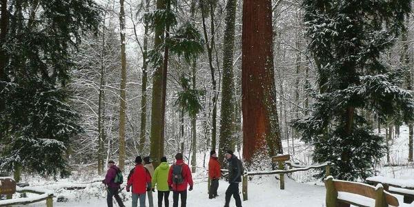 Niester Riesen im Schnee