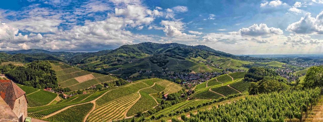 Panoramablick über Durbach