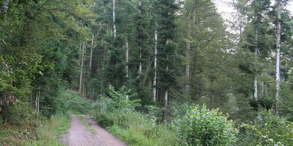 Der Wanderweg nach Günnenbach