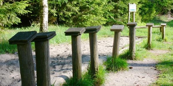 Auf dem Waldlehrpfad Taubensuhl können Kinder ihre Sprungkraft testen...