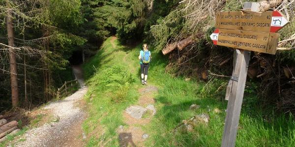 Wir wandern durch den Wald und schon bald erreichen wir die Abzweigung in Richtung Tribulaunhütte.