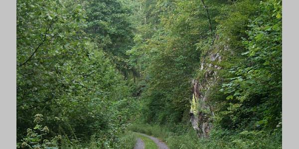 Auf dem Wehratal-Erlebnispfad