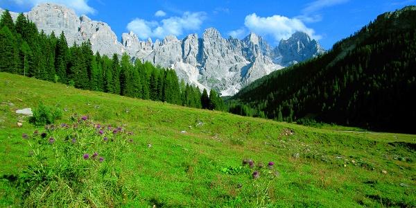 Val Venegia - Under the Pale di San Martino (Dolomites)