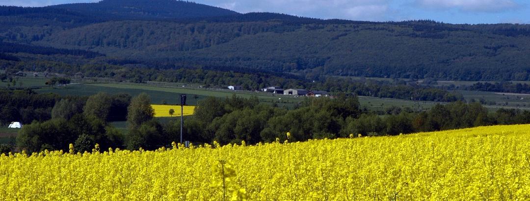 Rapsfelder bei Neu Ansbach.
