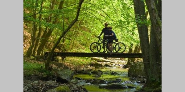 Mountainbike-Tour im Wald