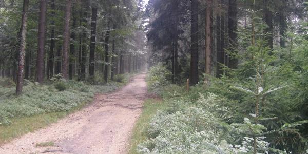 Über mehrere Kilometer führt uns ein Waldweg durch naturnahen Buchenwald.