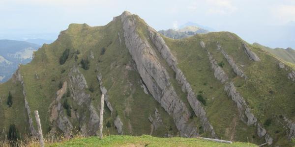 Rindalphorn