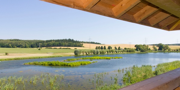 Blick vom Beobachtungsturm auf den Frießnitzer See