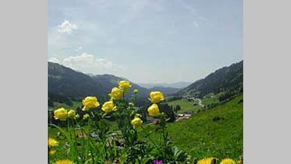 Die heimische Flora kann beeindrucken.