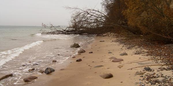 Die unter Naturschutz stehende Steilküste zwischen Sellin und Binz hat gerade nach Stürmen einen wilden und sehr natürlichen Charakter.