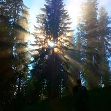 Kurz vorm Gipfel brach sich die Sonne in den Bäumen und im Nebel...