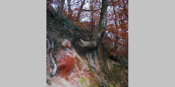 Interessant: ein Sandsteinbaum am Wegrand.