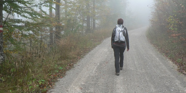 Dann ein paar Schritte über die Forststraße ...