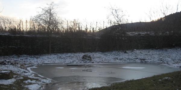 Der Teich ist Teil des Biotopes am Kirchberg.