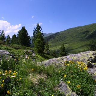 Panorama Flüela Schwarzhorn