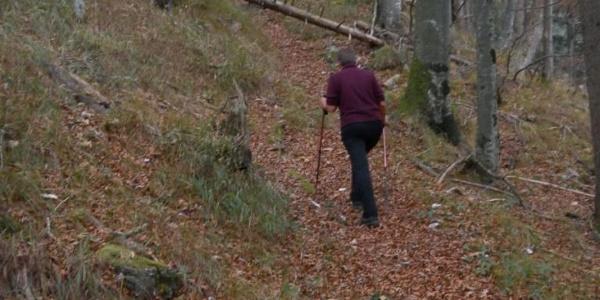 unmarkierte Pfade am Waldrücken