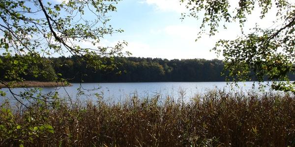Der Dagowsee liegt inmitten von Brandenburgs zweitgrößtem Naturschutzgebiet.
