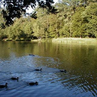 Ein Teich mit Enten im Landschaftspark Fasanerie Aschaffenburg.
