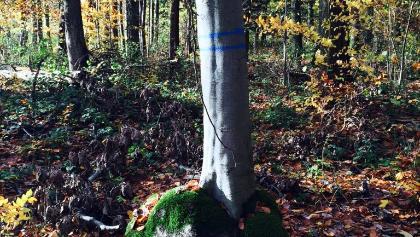 Was es für Bäume gibt...