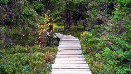 Die Wegeführung im Nationalpark Harz ist ausgezeichnet.