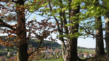Gras-Ellenbach.