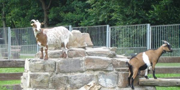 Das Tiergehege der Stadt Greiz