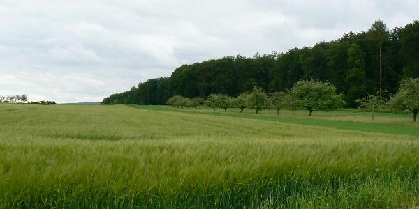 Felder auf dem Weg nach Nesselwangen.