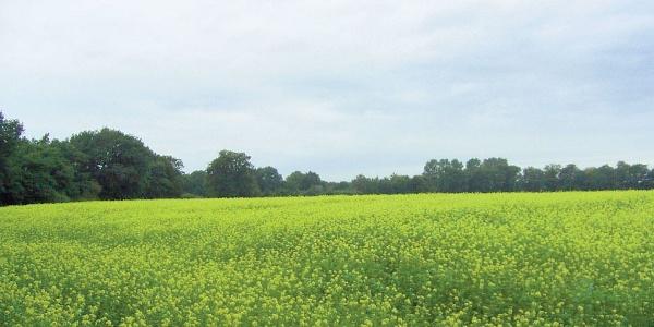 Unsere Tour führt uns über weite Felder und Wiesen.