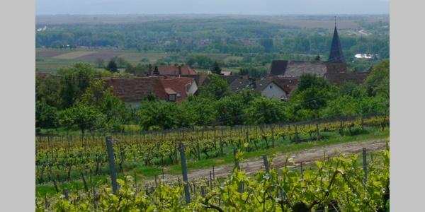 Ein Blick zurück auf den Weinort Schweigen-Rechtenbach.